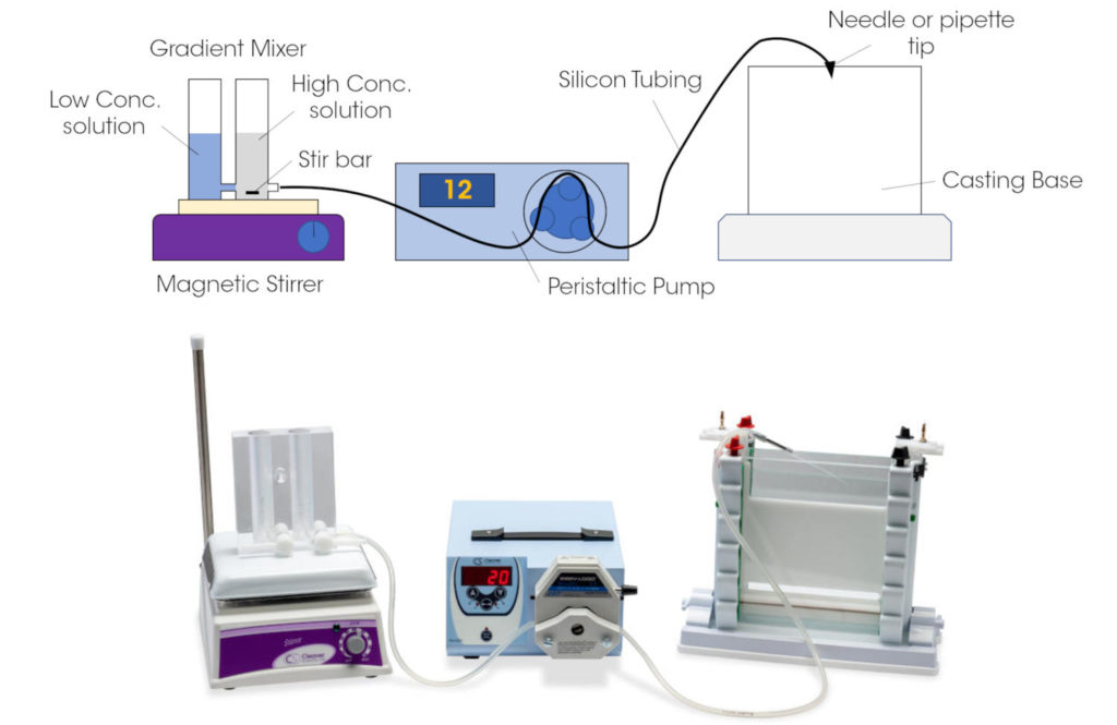 Figure 3: Casting a DGGE gel. Polyacrylamide solutions with high and low concentrations of denaturing agents are mixed gradually in a gradi-ent mixer. This mixture is pumped to a casting system when the gel can polymerise between glass plates, ready for electrophoresis.