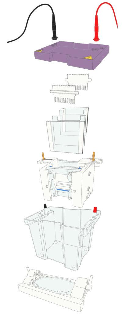 Vertical Electrophoresis Tank Diagram